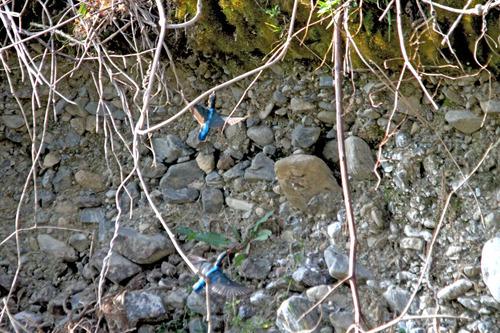 IMG_5202 オスメスが巣穴へ のコピー