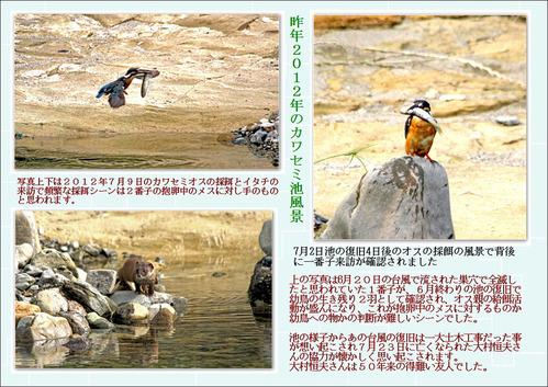 昨年2012年のカワセミ池風景