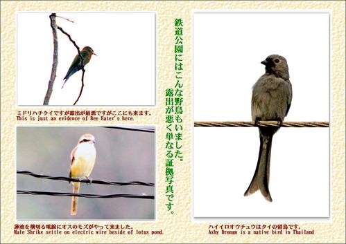 鉄道公園の野鳥証拠写真