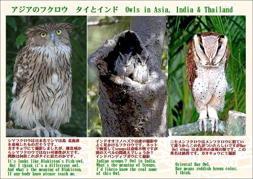 アジアのフクロウ