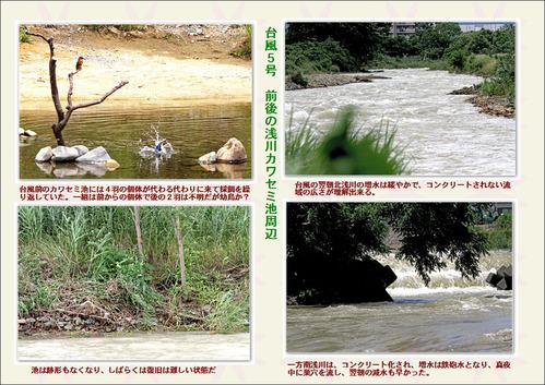 台風前後の浅川