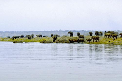 4 チョベ河の象ボツアナ