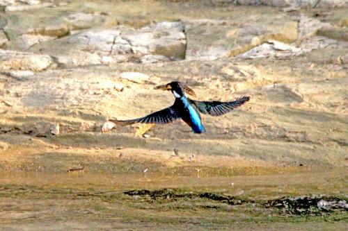 IMG_8343 幼鳥 の漁ブログ