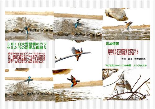 3月1日のカワセミ池ブログ