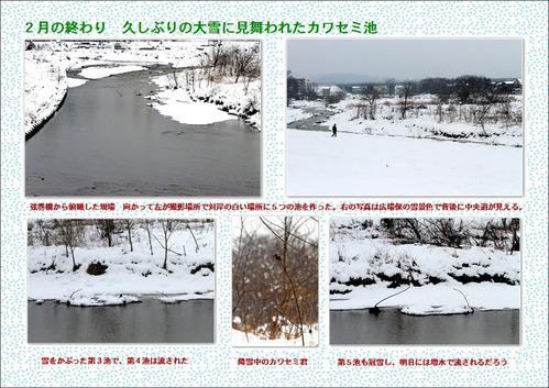雪のカワセミ池ラベル ブログ