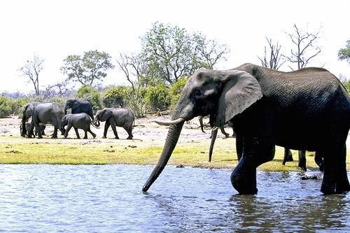 10 チョベの象