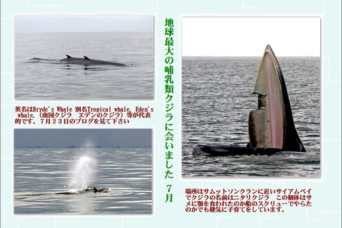 16番地球最大の哺乳類クジラに会いました 7月