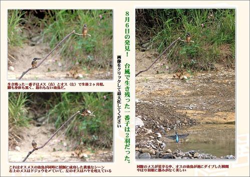 台風で生き残った一番子は2羽