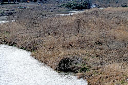 IMG_6816 河川敷のブッシュ
