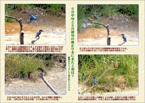 6月中旬から8月初旬池の止り木に来た2羽は?