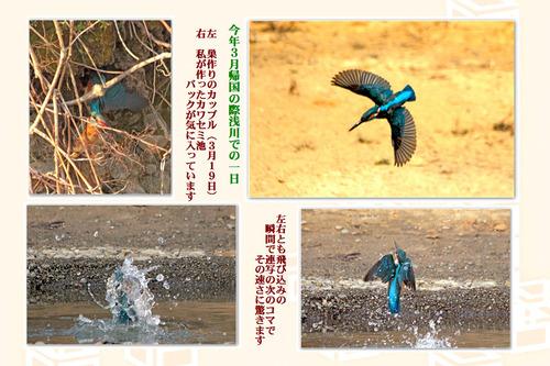 7番3月カワセミ池日本