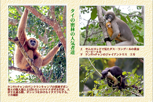 15番タイの密林の人気者達