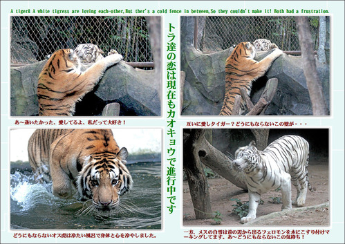 虎達の恋2
