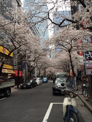 IMG_0268 事務所近くの桜