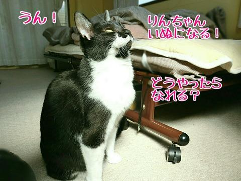 [画像:0498f3bb-s.jpg]