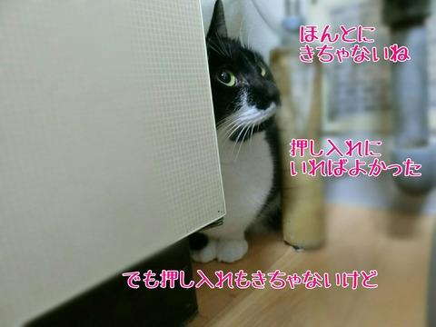 [画像:0eb73175-s.jpg]