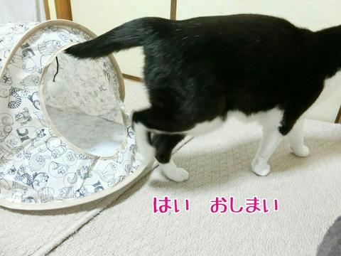 [画像:118c1448-s.jpg]