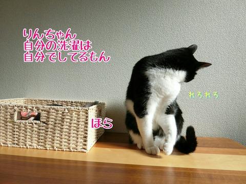 [画像:2d5130a0-s.jpg]