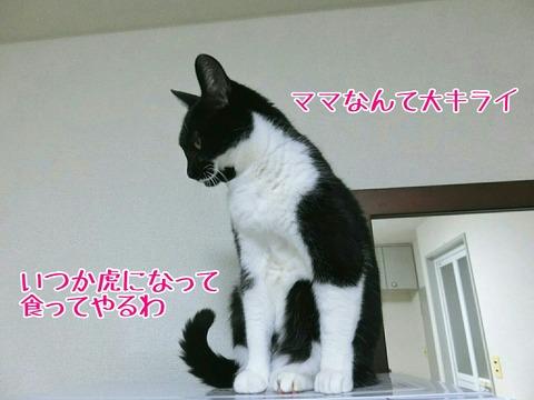 [画像:3264dac0-s.jpg]