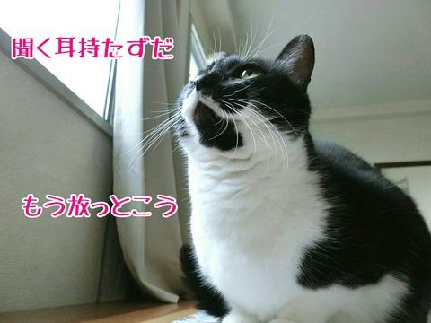 [画像:3d8acc77-s.jpg]
