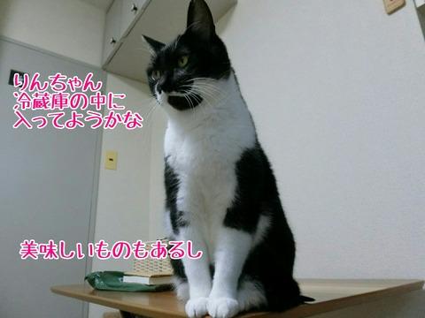 [画像:80ea77d6-s.jpg]