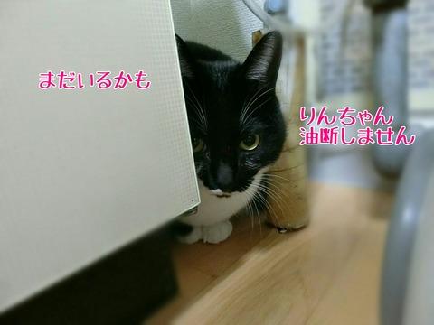 [画像:954f12cf-s.jpg]
