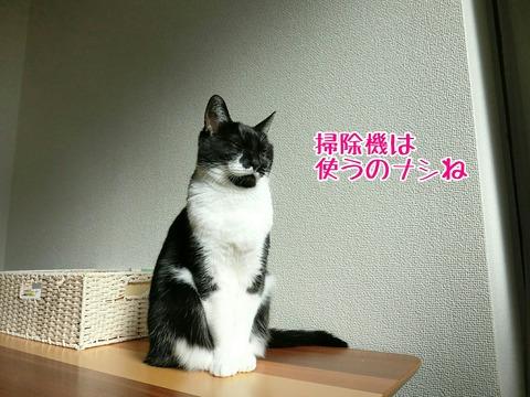 [画像:b5332882-s.jpg]