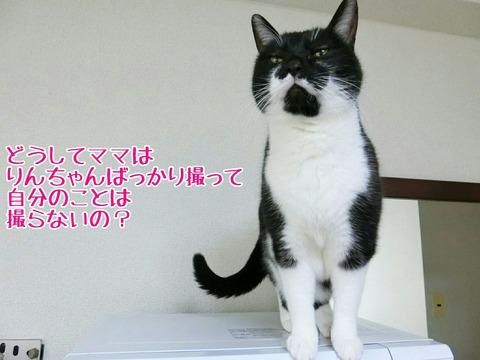 [画像:b71ecd66-s.jpg]