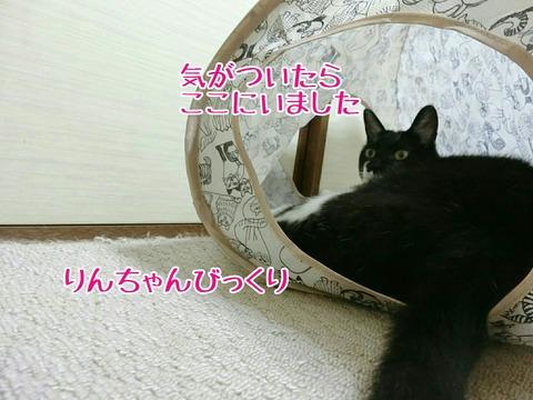 [画像:c602aba7-s.jpg]