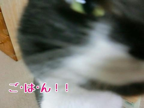[画像:d4ec7a6d-s.jpg]