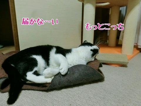 [画像:d5d107c1-s.jpg]