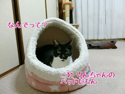 [画像:d844defb-s.jpg]