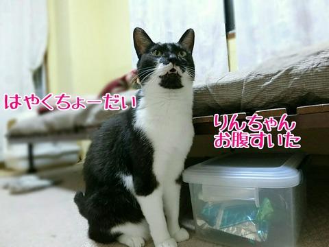 [画像:db130444-s.jpg]