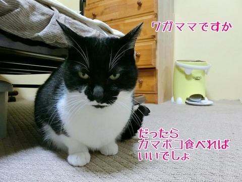 [画像:db3c172b-s.jpg]