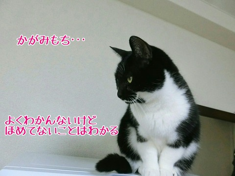 [画像:dcf47bae-s.jpg]