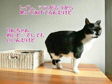 [画像:f9716b43-s.jpg]