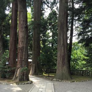 白山比咩神社杉並木