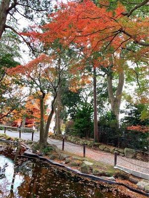 伊豆山の紅葉