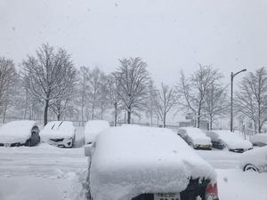 中標津の雪
