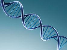 遺伝子暗号