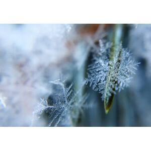 雪の結晶・六花