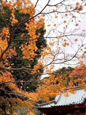 伊豆山神社 紅葉