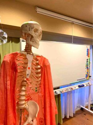 骨格標本1