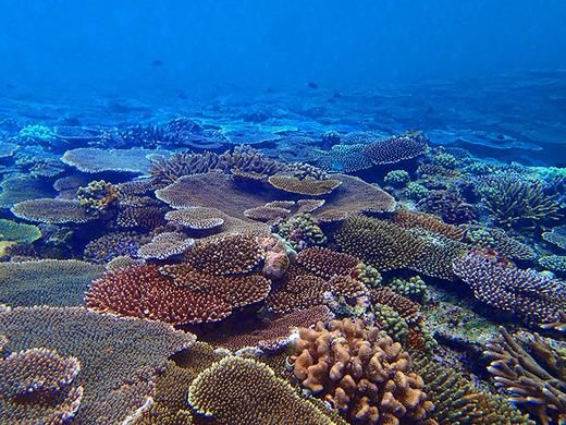 3月5日はサンゴの日 伊江島のサンゴ礁