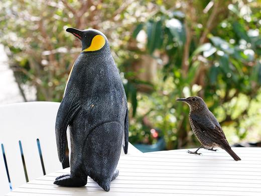 ひよちゃんとペンギン