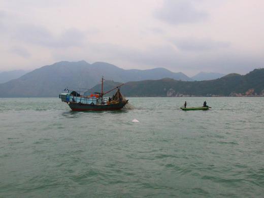 漁船の周りにピンクイルカ
