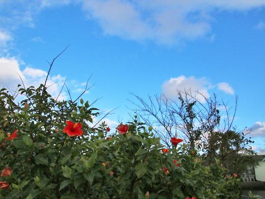 寒波の翌日は青空の伊江島
