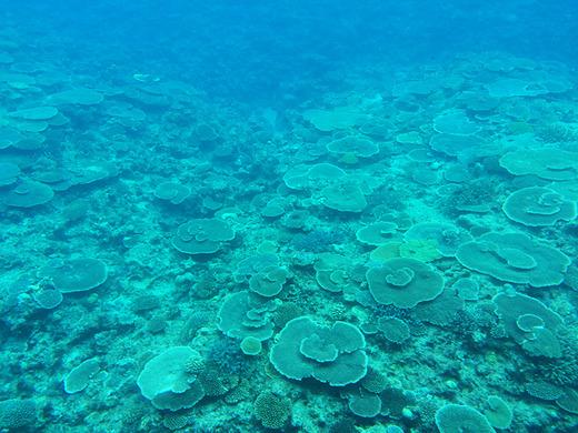 伊江島の水中観光船で見るサンゴ礁