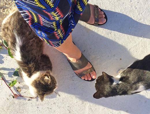 カフェの外には、ネコがたくさん
