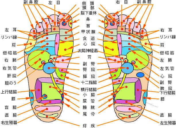 足の裏のツボ 足裏反射区01